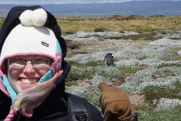 janne_landausflug_pinguin